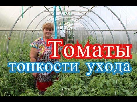 Как ухаживать за помидорами в теплице из поликарбоната видео