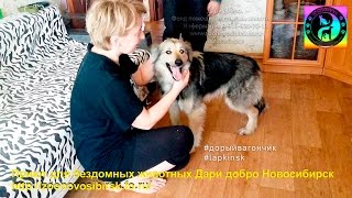 Счастливая собака из приюта знакомится с новым домом и хозяевами | the dog was taken from a shelter