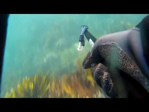 Spearfishing banks peninsula