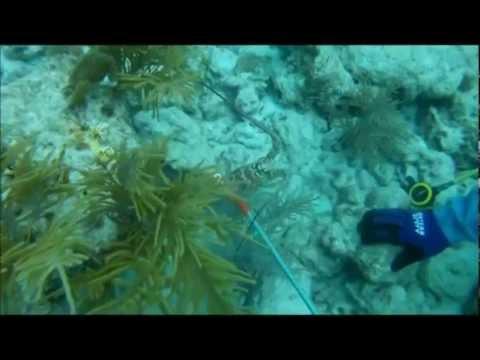 Cách bắt tôm hùm dưới biển vô cùng hiệu quả