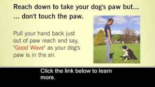 Basic Dog Training Tips : How To Train A Dog Or Puppy To Stand, Shake And S
