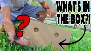 what-s-inside-the-box