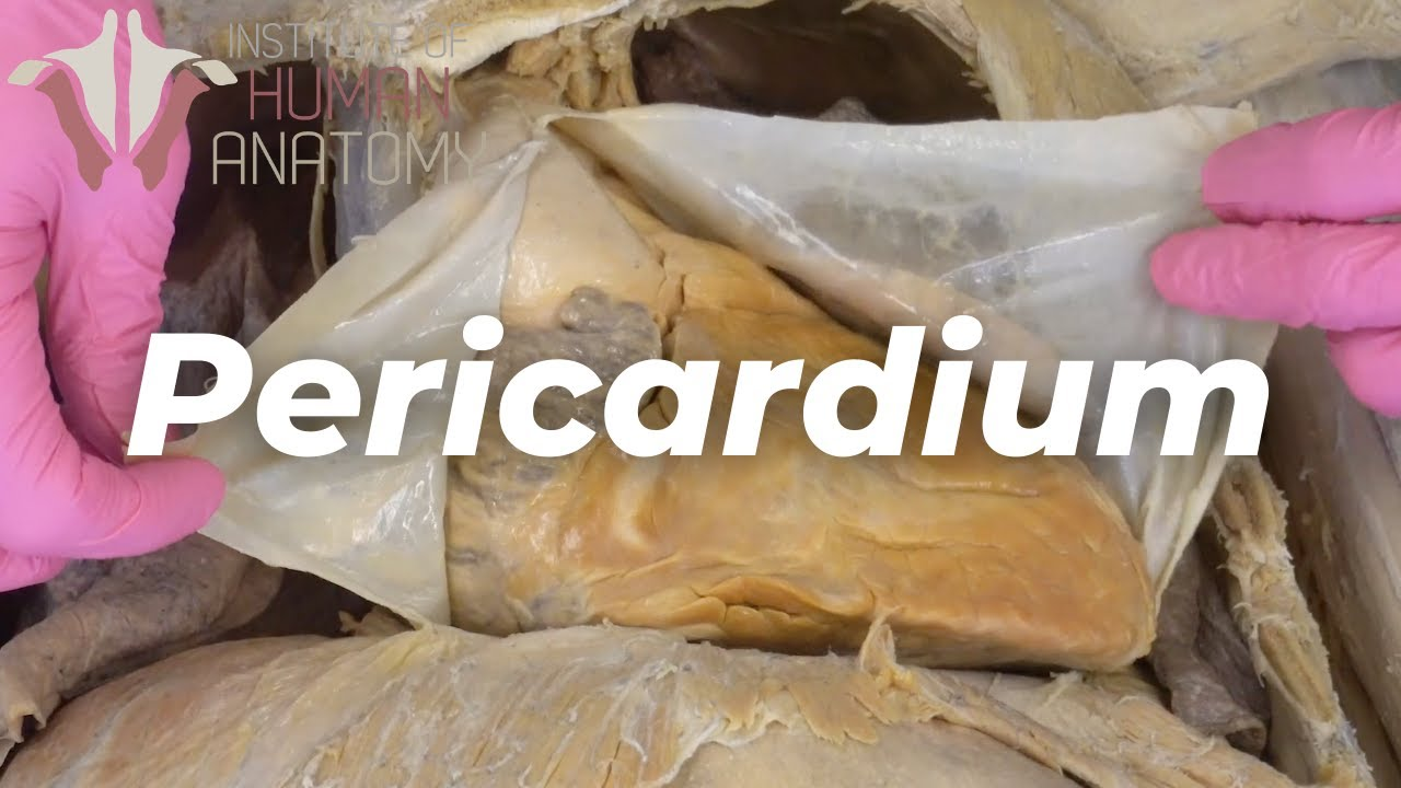 Your Heart Sits In a Sac??? | Pericardium & Pericarditis