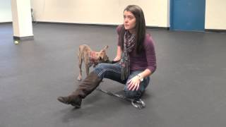 Training Small Dogs To Lay Down