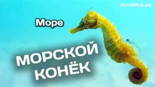Морской конек. Энциклопедия для детей про животных. Море