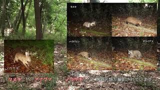 潜入!長池公園の秘密スポットVol 2