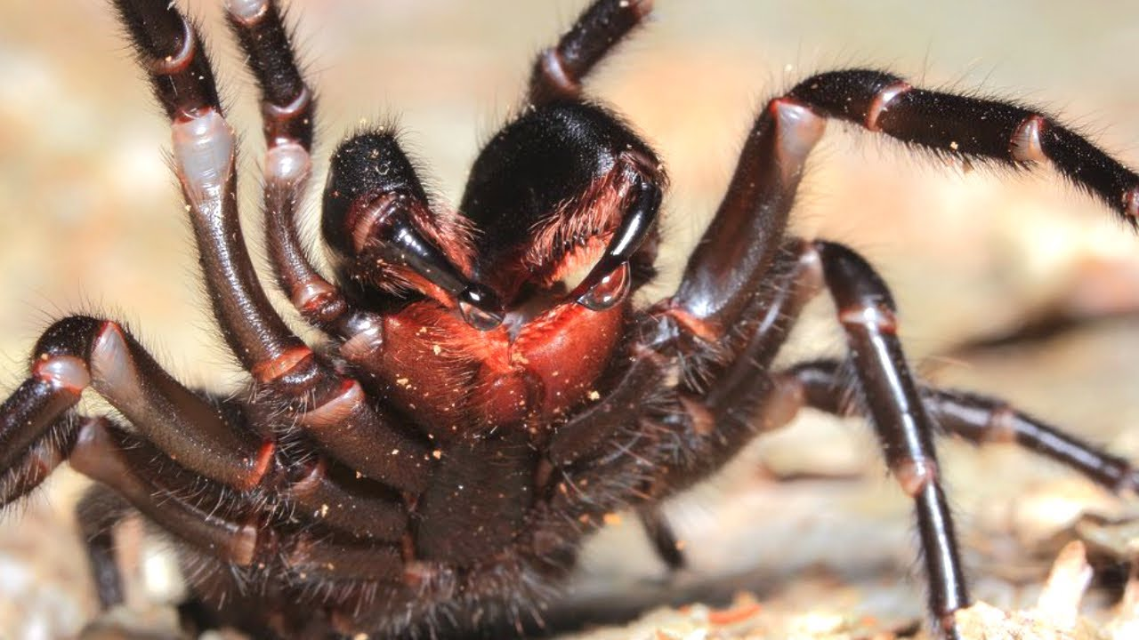 10 Deadly Animals Lurking In Your Backyard