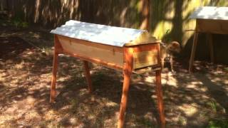 First Top Bar Hive...hives! - 019 - Queenless Split