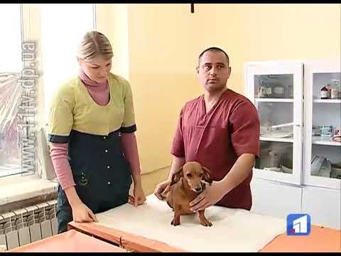 Новости 11 канал: Навесні розпочнеться капітальний ремонт комунального притулку для тварин