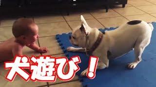 Baby Laughing Videos Compilation / 「絶対笑う」 かわいい赤ちゃんが...
