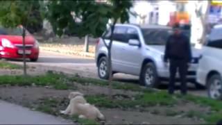 Полицейский неумело пристрелил собаку (без мата)