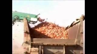 Shuknecht SP-132 Onion Harvester