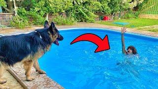 شوفو رده فعل الكلب لما شاف صاحبه يغرق | مقلب الغرق