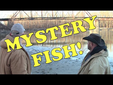 Mystery Fish Caught On Wabash River - Fishing With Fatboy Dan's Great Outdoors!
