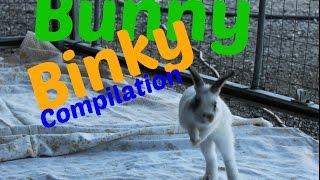 Bunny Binky Compilation