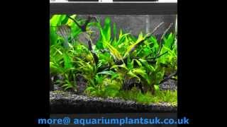 Planted Aquarium First Steps To Your Planted Aquarium - Growing Floating Plants
