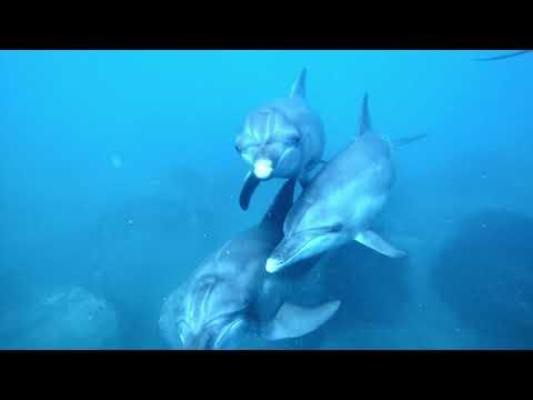 【イルカの聖地・御蔵島】野生のミナミハンドウイルカと急接近!!イルカの鳴き声にも注目♪【ドルフィンスイム】