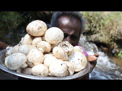 Daddy prepare a MUSHROOM gravy in water falls/village food factory