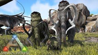 mammoth tame breeding 35 ark survival evolved