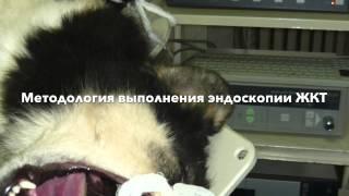 O'quv veterinariya endoskopiya KARL STORZ aprel 2014