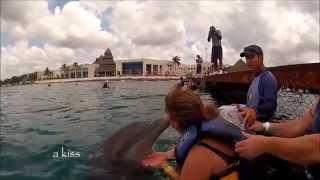 Dolphin Discovery Encounter Push Pull Swim Chankanaab Cozumel Mexico