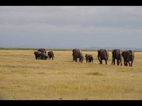 Amboseli, Lake Nakuru & Lake Naivasha