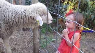 Funny Animals. Funny KIDS vs ZOO ANIMALS are WAY FUNNIER p. 2