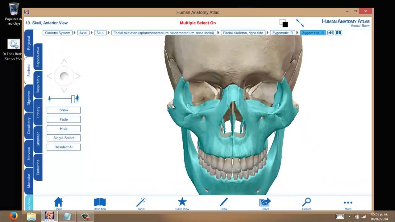 Huesos del Craneo 3D - Aprende de manera Didactica¡¡ part. 4 (ultima ...