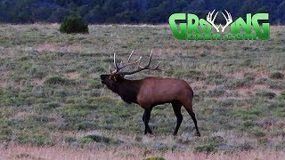 bow-hunting-elk-on-the-move-in-new-mexico-missouri-deer-down-463-growingdeer-tv