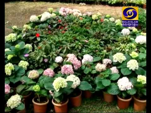 Ornamental Flower Expo