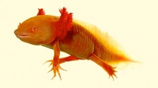 10 Real-Life Animal