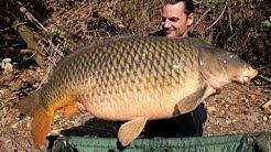 American carp record (USA) at 54lb 8oz (24,7 kg) - Raphaël Biagini