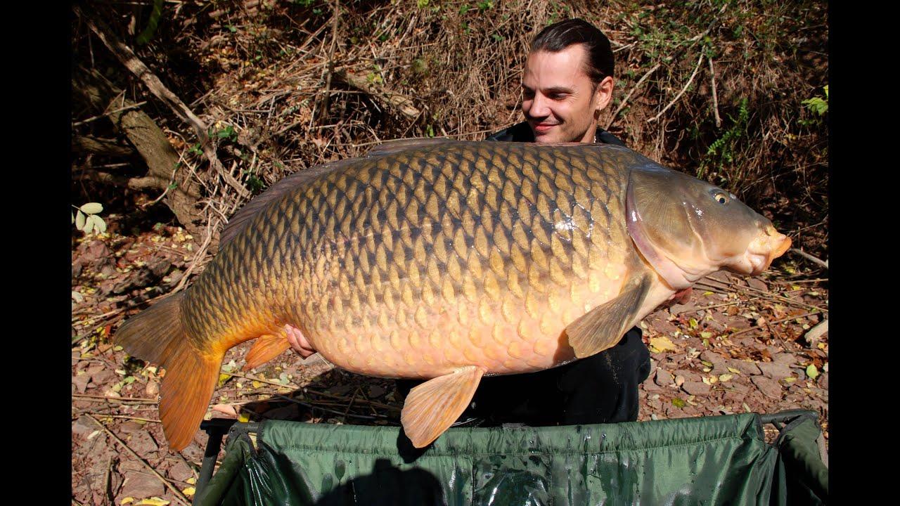 American carp record usa at 54lb 8oz 24 7 kg rapha l for Fishing r us