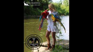 Попугаи красный и сине-желтый Ара/ реалистичные подвижные игрушки ручной работы