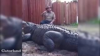 IS THIS THE BIGGEST GATOR IN THE WORLD