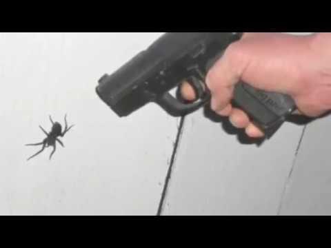 ✅Можно ли убивать пауков в Исламе ? |RUS|