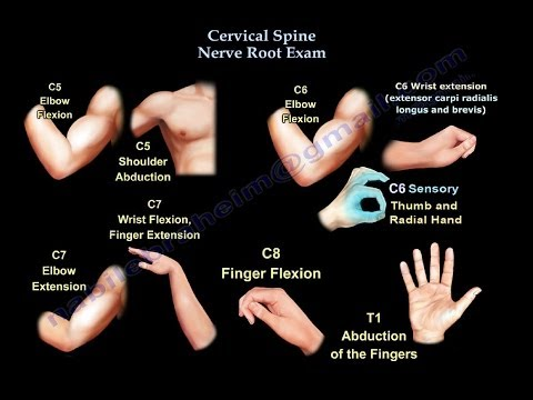 Cervical Spine Nerve Root Exam - Everything You Need To Know - Dr. Nabil Ebraheim