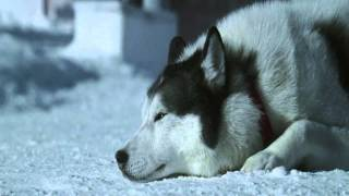 """""""Белый плен"""" by LIVING MUSIC ACTION 2012 (HD) Extended Version"""