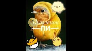 Клип-Цыпленок Пи||Avakin Life||Спасибо за 400 пельмешгов