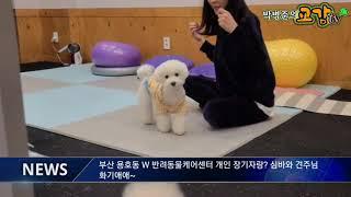 부산 W 반려동물케에센터 개린이 장기자랑? 심바