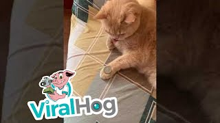 Cat Mimics Owner's Coin Trick || ViralHog