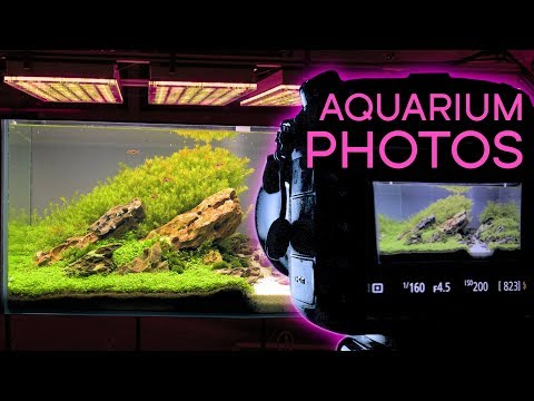 HOW TO: Photograph An Aquarium