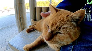 公園の茶トラ猫がベンチまで付いてきて隣に座って寄り添ってきた