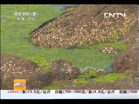 聚焦三农 20130627 浒苔之困-HD高清完整版