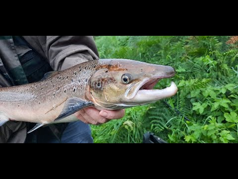First Salmon In 2020 HD - Fishing In Ireland - Irish Salmon - Big Fish 20lb - Watch In Full!