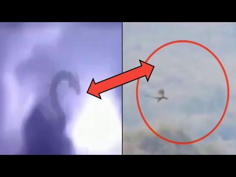 Драконы, снятые на камеру | Наиболее достоверные видео | ТОП 6 реальных Драконов | Они существуют