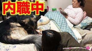 土曜日の午後、パートも早く終わり、家でマッタリ中のママちゃん、秋田...
