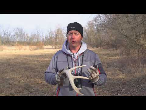 Key Shed Hunting Tip From Blitz TV