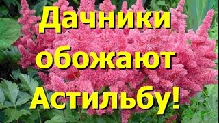 видео Растение астильба в дизайне сада: уход и размножение, популярные сорта для выращивания