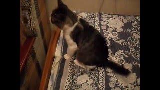 как зделать укол коту